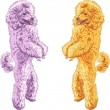 Royalty-Free Stock Imagen vectorial: Vector two dogs Poodle breed standing on his hind legs