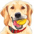 Vector funny dog breed Golden Retriever with ball — Stock Vector