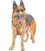 Vector color sketch dog German shepherd breed — Stock Vector