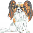 Stock Vector: Vector pedigreed dog Papillon breed
