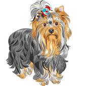 Vector cute pedigreed dog Yorkshire terrier — Stock Vector
