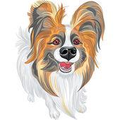 Vector pedigrí perro papillon de raza — Vector de stock