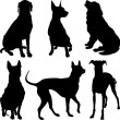 Vector silhouettes of dogs in various poses — Stock Vector