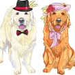Vector funny pair of dogs labrador retriever wearing hats and ti — Stock Vector