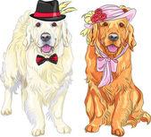Vector divertente coppia di cani labrador retriever indossando cappelli e ti — Vettoriale Stock
