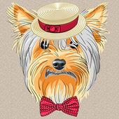 Vector funny cartoon hipster dog Yorkshire Terrier — Stock Vector