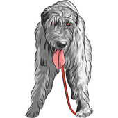 Vector dog Irish Wolfhound breed — Stock Vector