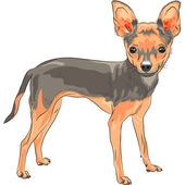 Vector sketch dog Chihuahua breed smiling — Stock Vector