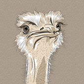 Vector closeup portrait of funny Ostrich Bird  — Stock Vector