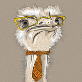 Vector closeup portrait of funny Ostrich Bird hipster — Stock Vector