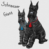 Vector black Giant Schnauzer dog sitting — Stock vektor