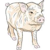 Vector closeup portrait of funny piggy — Stock Vector