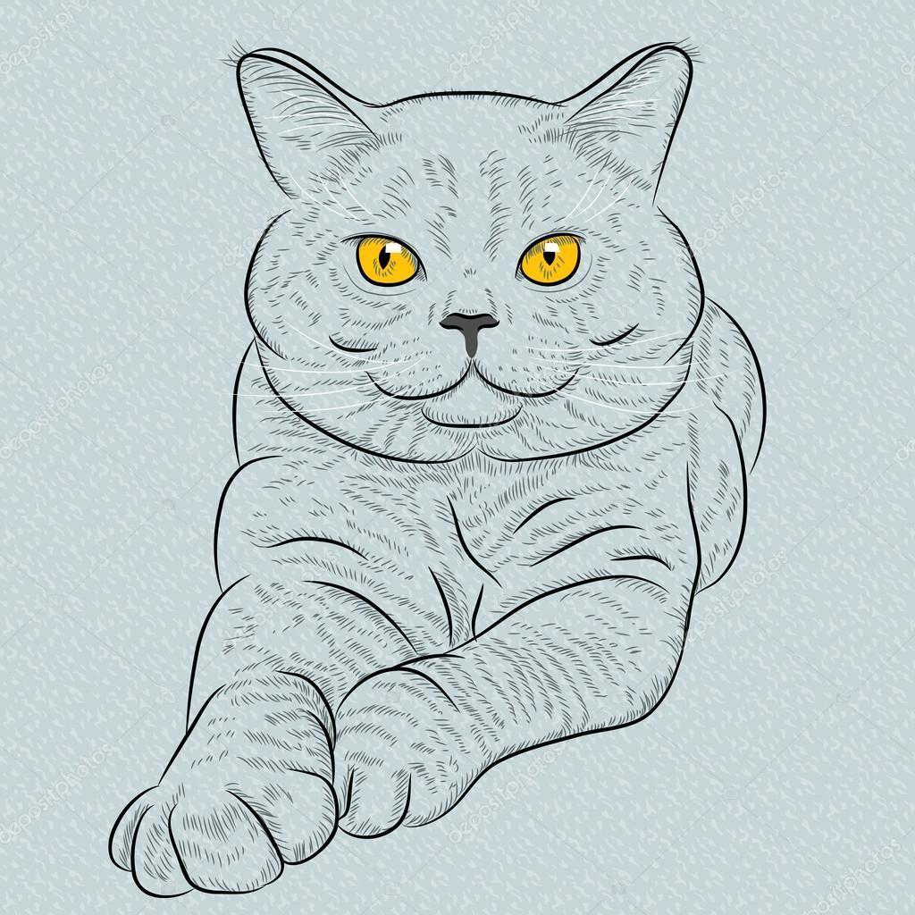 Котёнок британский рисунок