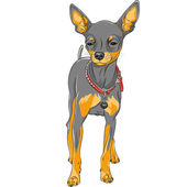 Vector sketch dog Chihuahua breed  — Stock Vector