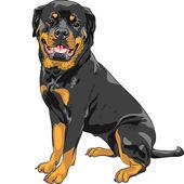 Vector dog Rottweiler breed — Stock Vector