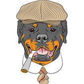 Vecteur dessin animé drôle hipster chien rottweiler — Vecteur
