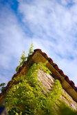 Vines on the wall natural background — Stock Photo