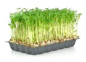 Watercress in a plastic tray — Stock Photo