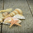 A selection of seashells and starfish — Stock Photo