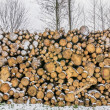 A pile of cut timber logs  — Stock Photo