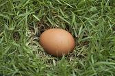 Egg on grass — Stock Photo