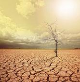 Globala uppvärmningen. — Stockfoto