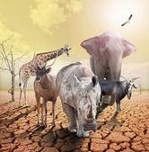 Globale opwarming van de aarde. — Stockfoto