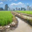 Rice field building — Stock Photo #25353415