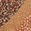 Grains — Foto Stock