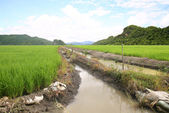 Rice mountains — Stock Photo
