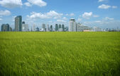 Rice field buildings — Stock Photo