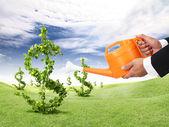 Peníze rostlina — Stock fotografie