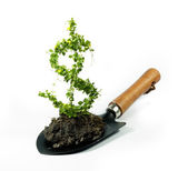 Plant dollar — Stock Photo