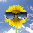 Sunglasses and sunflowe — Stock Photo