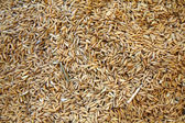Rice seed background — Stock Photo