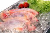 Fresh Red fish — Stock Photo