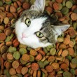 Can't get enough of dry food — Stock Photo
