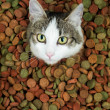 Portrait of cute cat surrounded with dry food — Stock Photo