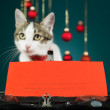 Wishes of a cat for christmas - Stok fotoraf