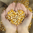 Stock Photo: Heart corn