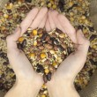 Mix grain heart - Stock Photo