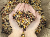 Mix grain heart — Stock Photo