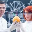 Постер, плакат: Laboratory studies on grapefruit