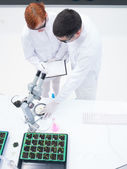 Experimental studies in a chemistry lab — Stock Photo