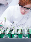 Student lab experiment — Stock Photo