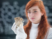 Pilze-laboranalyse — Stockfoto