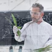 Scientist analyzing leafs — Stock Photo