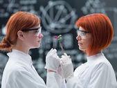 Jämförande laboratorieanalys — Stockfoto