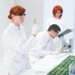 Постер, плакат: Scientists in a genetic engineering laboratory