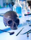 Ancient human skull — Stock Photo